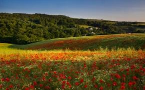 Картинка поле, цветы, холмы, маки, луг