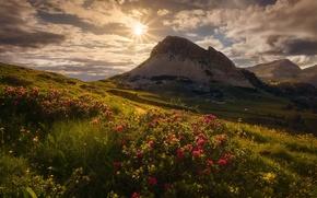 Картинка цветы, Альпы, Италия, горы, солнце, небо, трава, облака