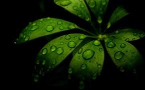 Картинка капли, лист, роса, затенение