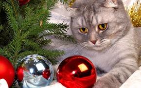 Картинка шарики, елка, Кот