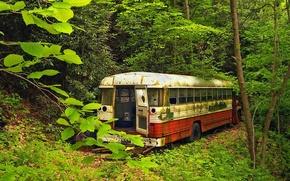 Обои зелень, Старый автобус, лес