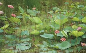Картинка лето, трава, листья, вода, цветы, озеро, пруд, картина, summer, grass, живопись, water, flowers, lake, leaves, …