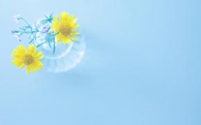 Обои цветы, flowers, широкоэкранные, HD wallpapers, обои, голубой, полноэкранные, background, fullscreen, желтый, ваза, широкоформатные, цветочки, фон, ...