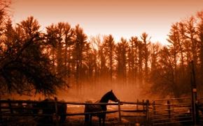 Картинка деревья, Лошадь, сепия