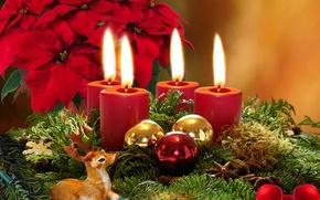 Картинка цветы, ветки, шары, елки, свечи, ёлочные, рождественские, пуансеттия, пуансетия, Оленёнок