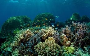 Картинка море, рыбы, дно, кораллы