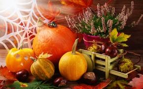 Картинка leaves, autumn, листья, тыква, урожай, still life, осень, harvest, pumpkin