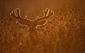 Картинка трава, олень, рога