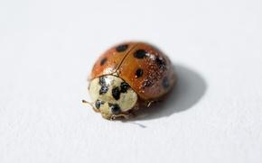 Картинка ladybug, shadow, ladybird