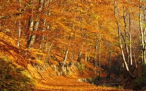 Картинка осень, лес, листья, деревья, листва, forest, листопад, роща, тропинка, trees, Autumn, leaves, path