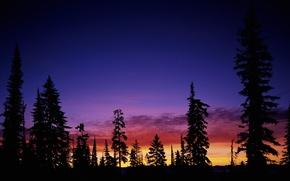 Обои небо, деревья, закат