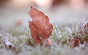 Картинка иней, трава, макро, лист