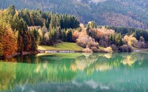 Обои осень, лес, природа, река, берег