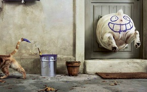 Обои юмор, Краска, кошка, собака