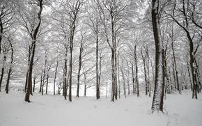 Картинка зима, лес, снег, деревья, Англия