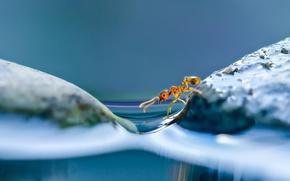 Картинка вода, макро, муравей, островки