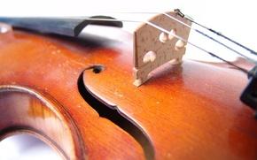 Обои музыка, жёлтый, скрипка