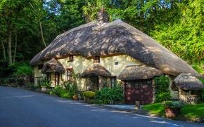 Картинка цветы, дорога, Англия, кусты, деревья, дом, Northlew, лес, дизайн