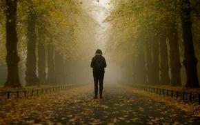 Картинка girl, misty, trees, park, autumn, leaves, fog, branches, path, foggy, mist