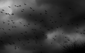 Картинка птицы, тучи, мрак, стая, кустарник