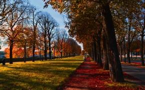 Картинка осень, листья, лучи, деревья, природа, Франция, Париж, colorful, дорожка, Paris, листопад, trees, nature, ряды, France, …