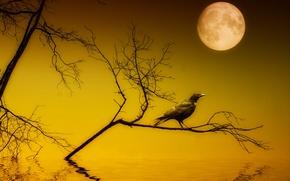 Картинка ночь, стиль, луна, ворон, монтаж