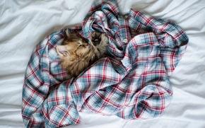 Обои кошка, Daisy, рубашка, одежда, котенок, Ben Torode, спит, клубок, сон, клетка