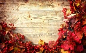 Картинка осень, листья, веточки калины, twigs of viburnum