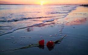 Картинка море, закат, розы