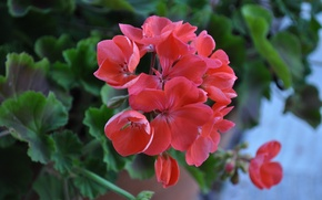 Картинка весна, цветение, боке, bokeh, Blossom, dark pink