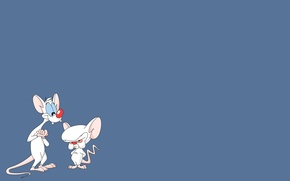 Обои крысы, мульт, Пинки и Брейн
