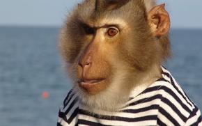 Картинка обезьяна, матрос, бародатый, тельняжка