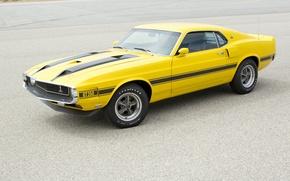 Картинка Shelby, 1969, GT350