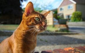 Обои усы, взгляд, фон, кошак, котяра, глаза, кот