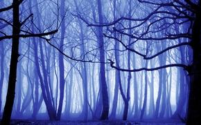 Обои лес, осень, деревья, туман