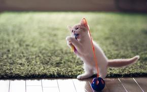 Картинка игрушка, котёнок, забава