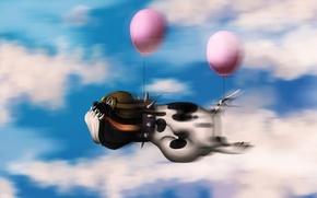 Обои небо, облака, воздушные шары, Собака, пилот, полёт
