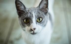 Картинка глаза, кот, дерево, wood, eyes, cat, looking, глядя