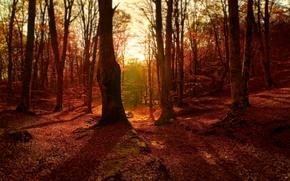 Картинка осень, лес, листва, colors, forest, Autumn, leaves, fall