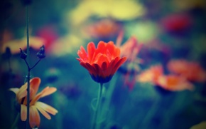 Обои цветы, макро, лепестки, поле, луг, капля, трава
