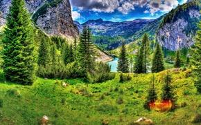 Картинка зелень, горы, краски, ели, hdr, Словения, Slovenia, Kobarid