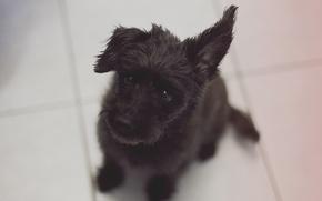Картинка взгляд, друг, собака, щенок