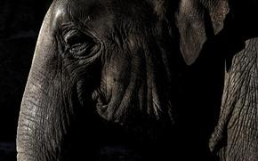 Картинка глаз, слон, ухо, хобот