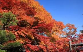 Обои Деревья, осень, Небо, листья