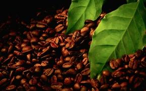 Картинка листья, макро, чёрный, зерно, листок, кофе, зелёный, листки, зёрна