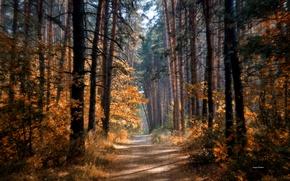 Картинка дорога, осень, лес, солнце, деревья