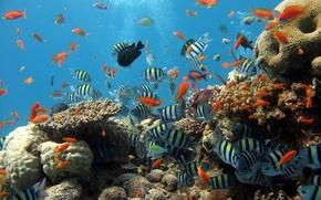 Обои море, рыбки, рыбы, океан, рыбалка, аквариум, кораллы, дайвинг