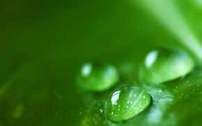 Картинка капли, зеленый