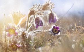 Картинка капли, макро, свет, цветы, дымка