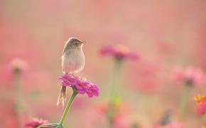 Обои цветы, клумба, камышевка, птица